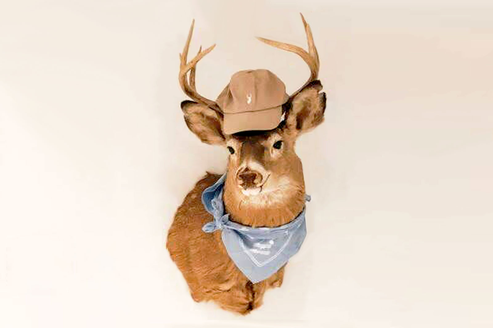 Skittles the deer head - PollEv Mascot